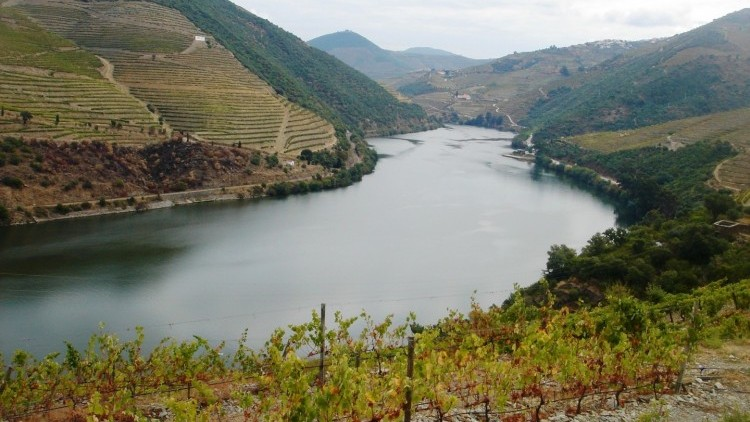 Douro Wine Tour - Full Day