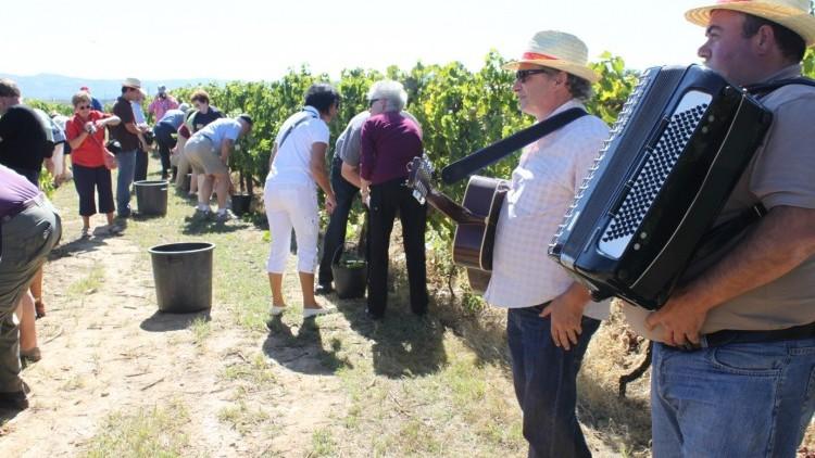 Harvest program at Quinta da Avessada.
